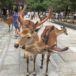 S1E9: JAPONSKO – Múzeum bizarností